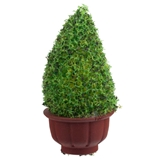 Small Topiary in Planter