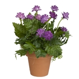 Potted Purple Mum