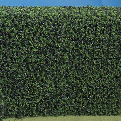 Squeeze Me Evergreen Hedge - 3 inch x 24 inch