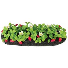 Strawberry Garden Bed