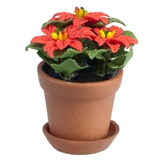 Three Bloom Potted Poinsettia