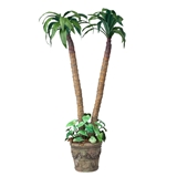 Corn Stalk Dracaena Potted Plant