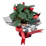 Potted, Foil-Wrapped Holly with Berries