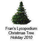 Fran's Lycopodium Christmas Tree