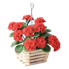 Hanging Red Geraniums in Slatted Planter
