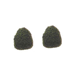 "Pair of ""Squeeze Me"" Evergreen Bushes"