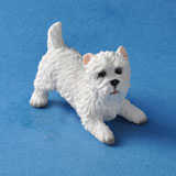 Playing West Highland Terrier