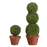 Pair of Topiaries