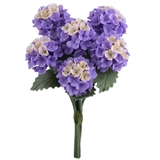 Six Purple Hydrangeas