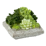 Square Succulent Planter
