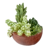 Succulent Planter Bowl
