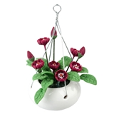 Crimson Glory Hanging Basket