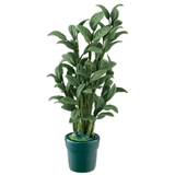 Large Potted House Plant