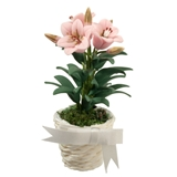 Potted Pink Lily