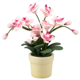 Pink Orchid Arrangement
