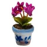 Fuchsia in Blue and White Pot