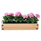 Pink Geranium Window Box