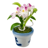 Fuchsia and White Potted Orchid