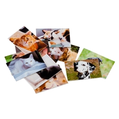 12 Pet Photos