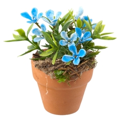 Blue Delight Potted Plant