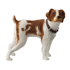 French Brittany Spaniel