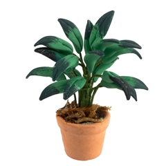 Potted Tropical Fern