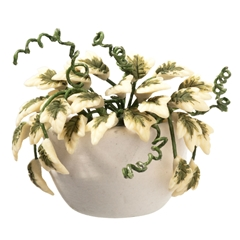 Variegated Ivy Wall Planter